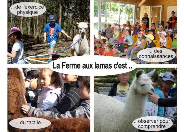 FERME AUX LAMAS_11